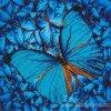 GR-DD5.014 Modré třepotání