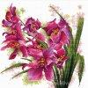GR-NW640.070 Půvabné orchideje