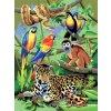 PJS28 V džungli
