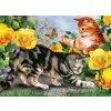PJL45 Hrající si koťata