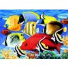 PJL30 Tropické rybky