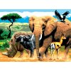 PJL9 Africká zvířata
