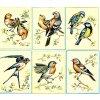 SEG-921.19 Ptáčci (set 6ks)