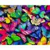 WD-057 Barevní motýlci