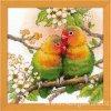 RIO-1780 Zamilovaní papoušci