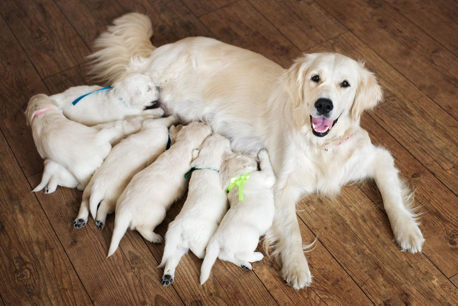 mum_with_pups