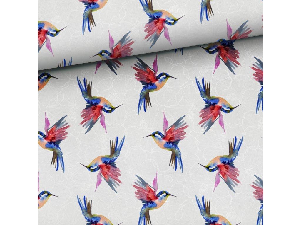 colibri grey