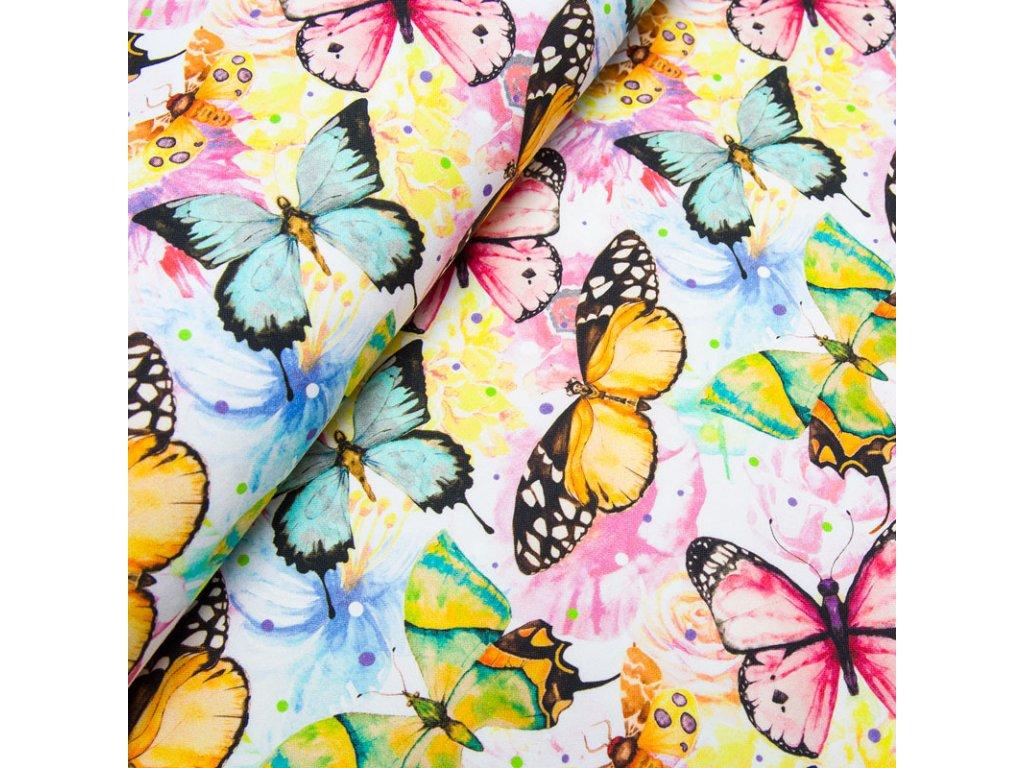 motyle na kwiatach2s