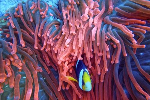 Barva roku 2019 je i pro nehty korálová