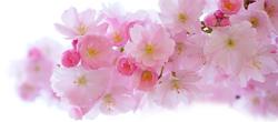jarni-kvety