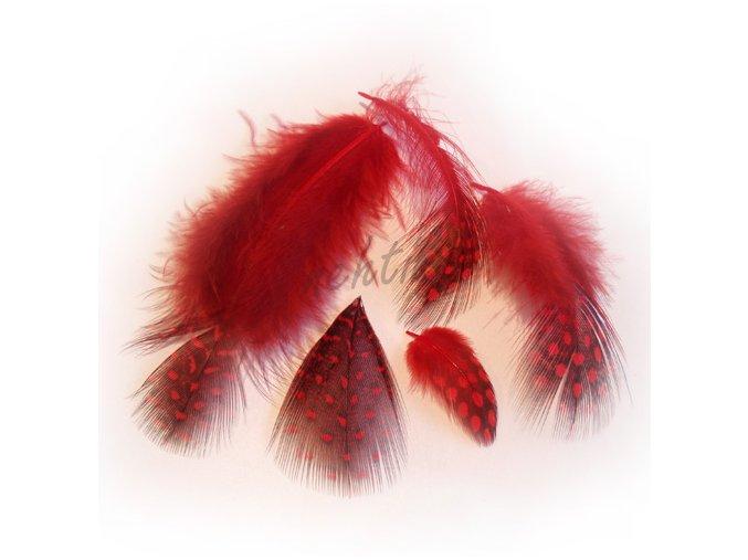 Peříčka paví očka červená