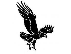 Šablona na tetování Dravec