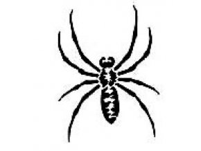 Šablona na tetování Pavouček