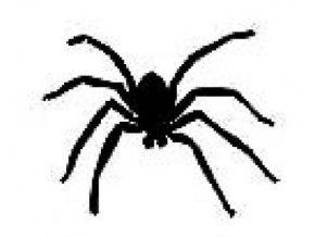 Šablona na tetování Pavouk