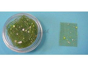 Zdobení nehtů - Barevná síťka S43 zelená