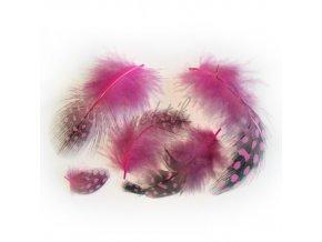 Peříčka paví očka růžová