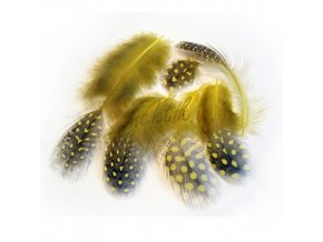 Peříčka paví očka žlutá