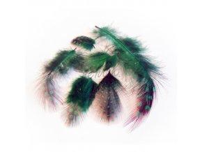 Peříčka paví očka zelená