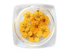 Sušené květy 14