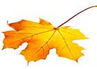 Podzimní zdobení