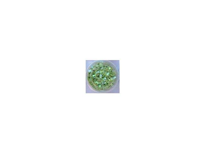 Zdobení nehtů hvězdy (světle zelená), 500 ks