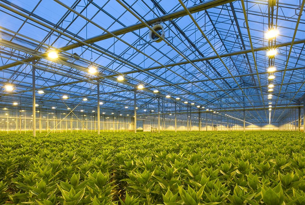 industrial-hydroponic-farm