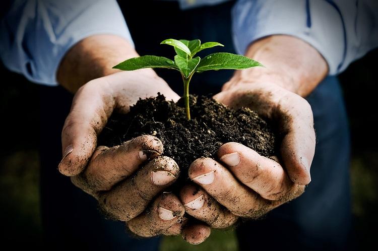 prirodni-hnojivo-biohnojivo-hnojiva-z-rostlin-a-bylin-priprava-vyroba
