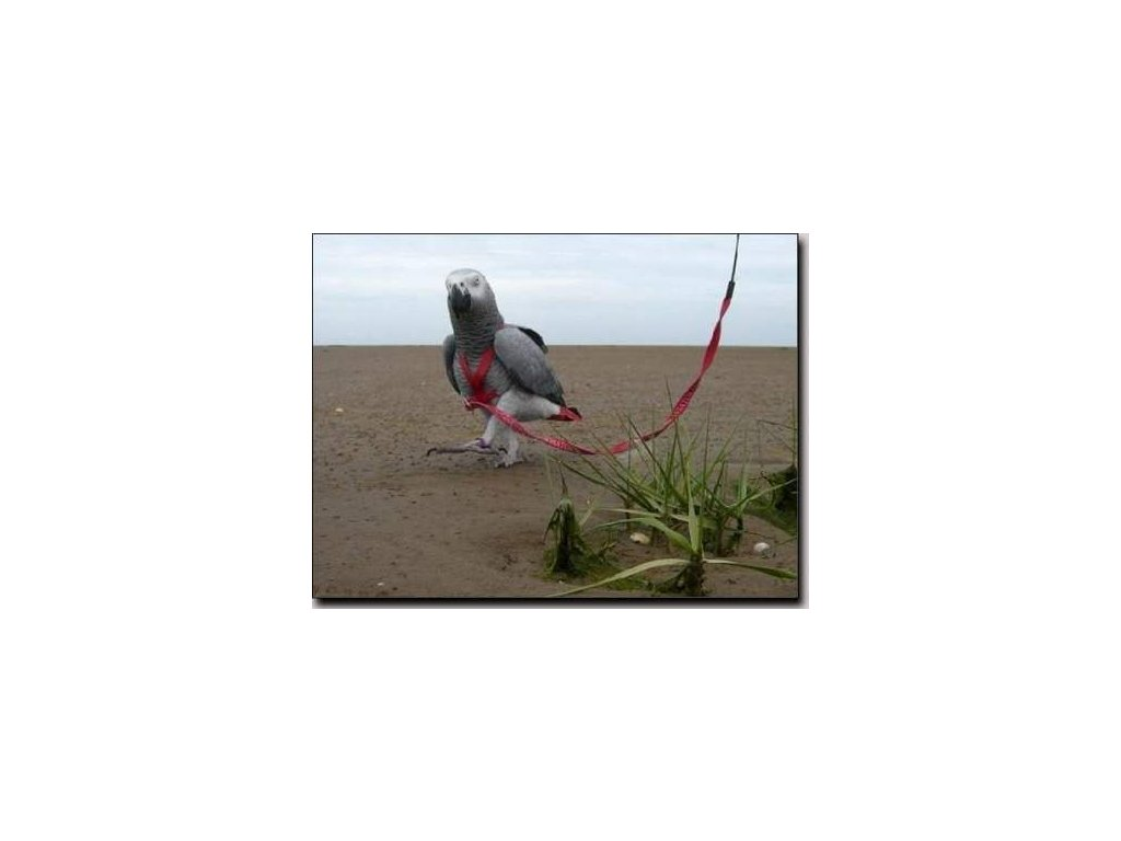 Kšandy s vodítkem pro papoušky Terra vel. L