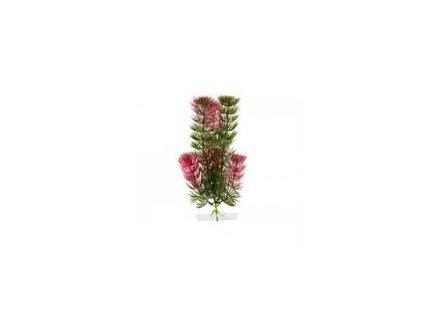 Rostlina Anacharis 18 21 cm