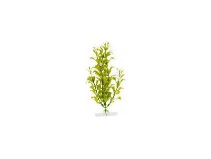 Rostlina Hygrophila 18 21 cm
