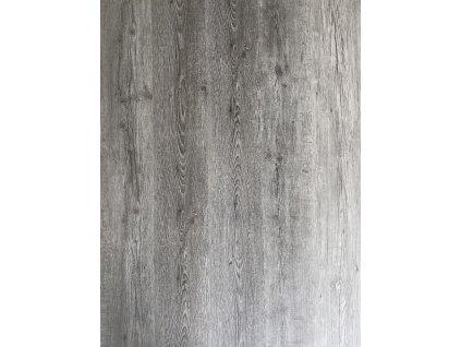 Dub šedý
