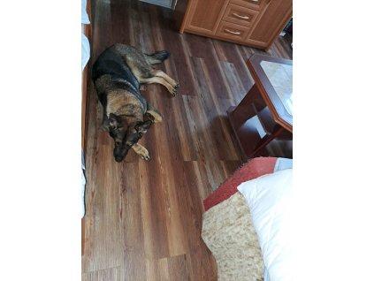 Vinylová zámková podlaha - Cedr hnědý