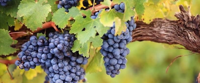 Druhy přívlastkových vín