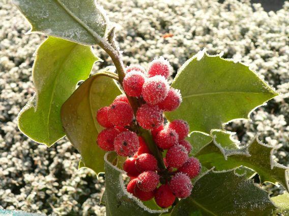 5 tipů, jak si zkrášlit zimní zahradu
