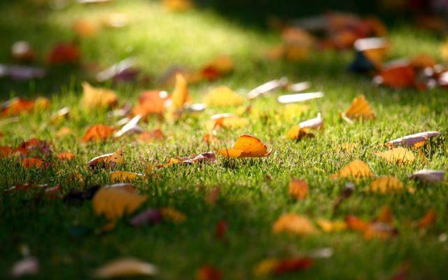 Jak posekat trávu na podzim