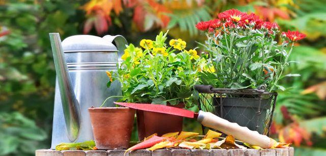 Příprava zahrady na podzim