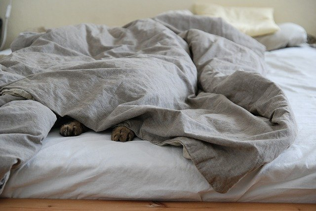 Zimní spaní? Typy náplní do peřin a dek