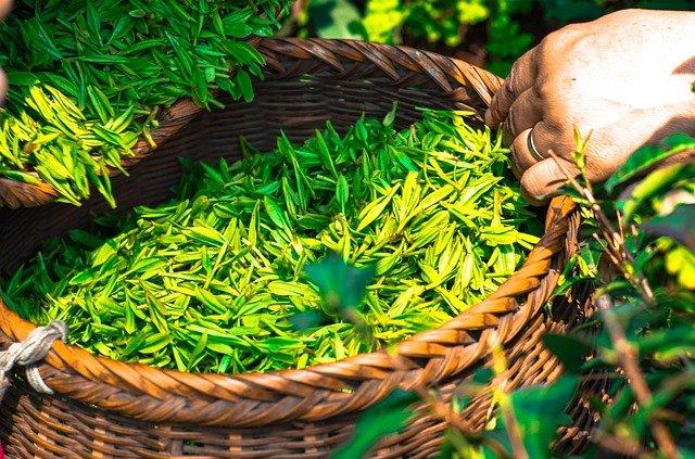Zelený a bílý čaj: životabudič tohoto jara