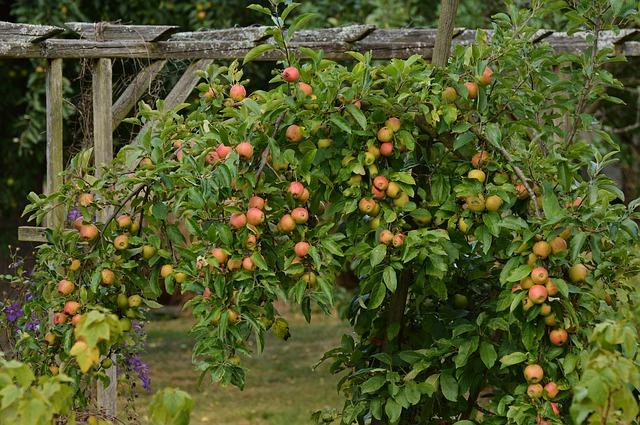 apple-tree-1605578_640