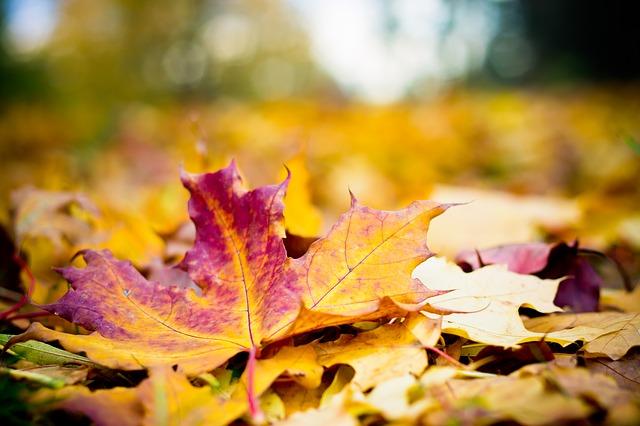 autumn-198880_640