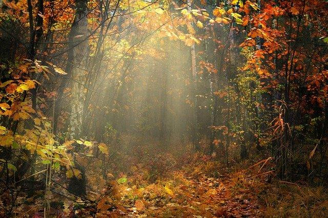 autumn-3359900_640
