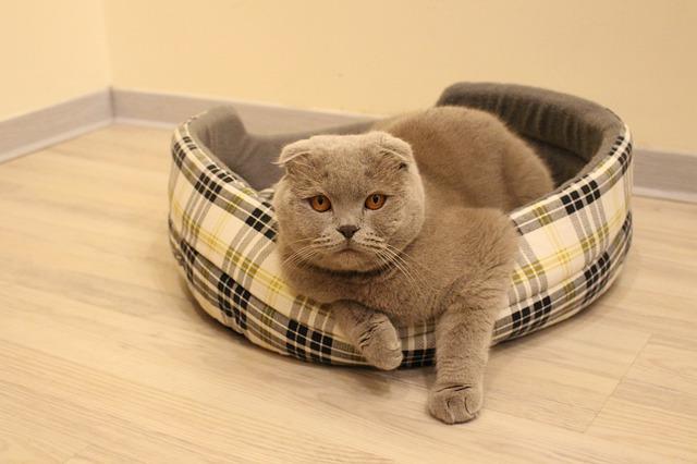cat-3076495_640