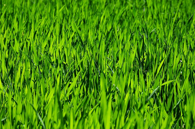 grass-3336700_640