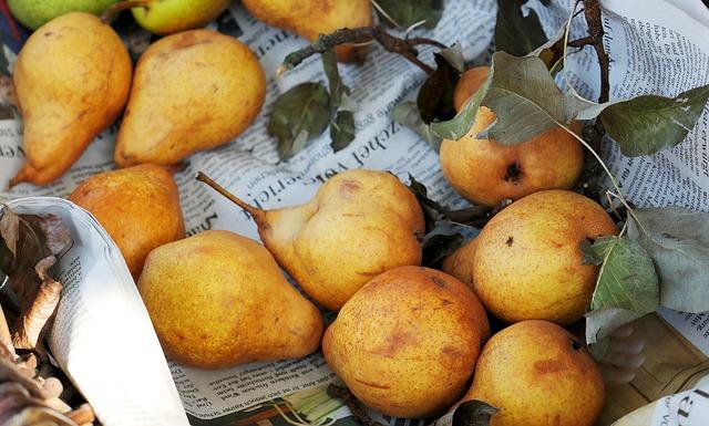 pears-3697536_640