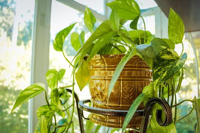 plant-2754303_640