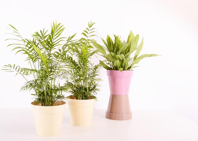 plants-2810510_640