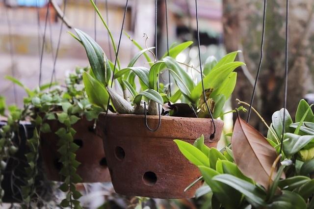 plants-3384951_640