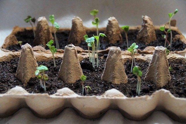 seeds-4810524_640