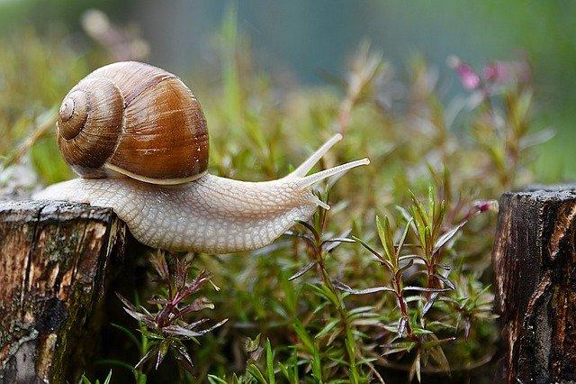 snail-4729777_640