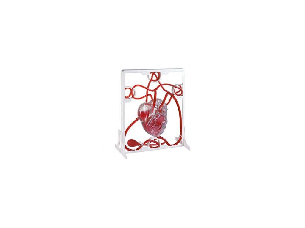 Model srdce a krevního oběhu